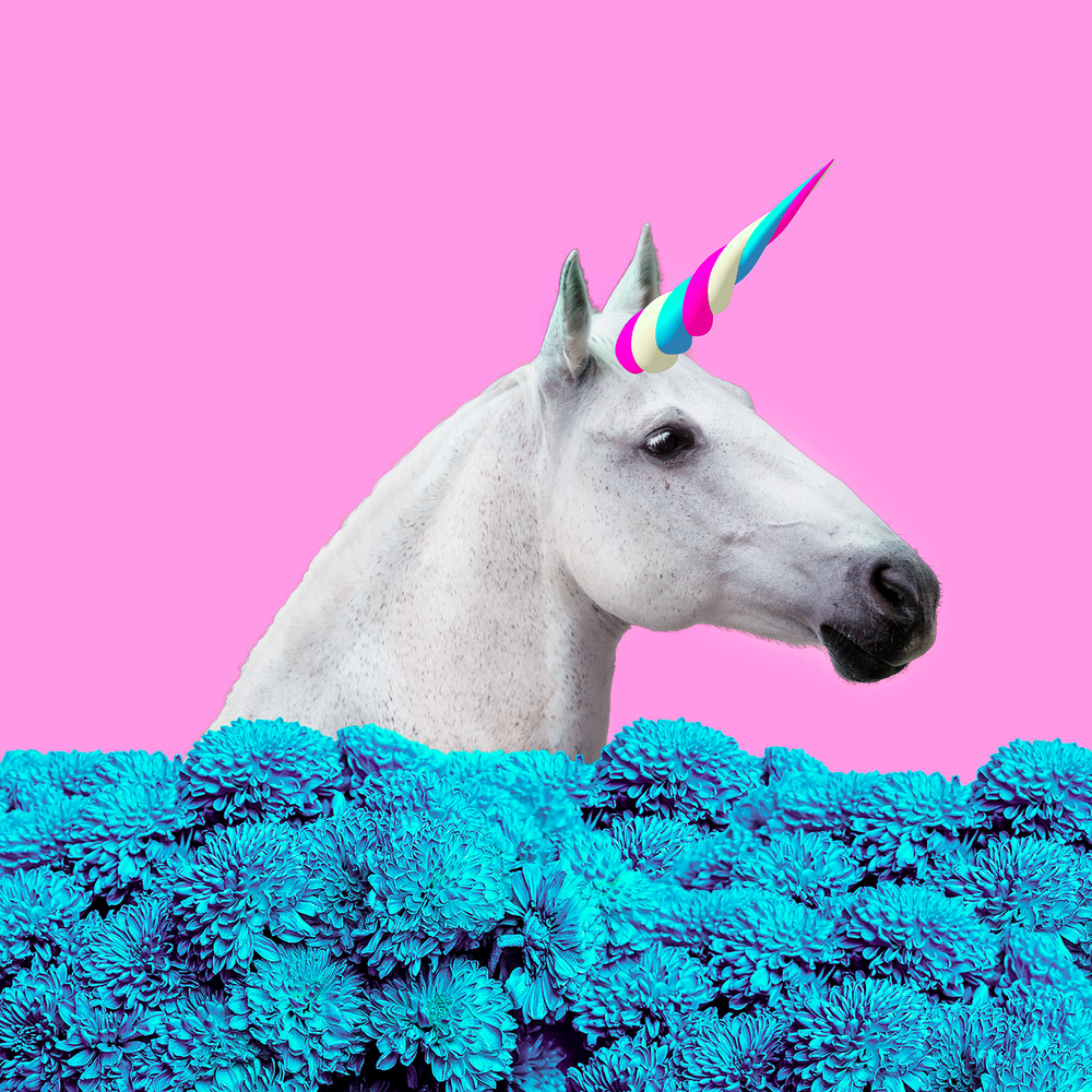 Theory vs. Reality – Don't Let the Promise of a Unicorn Run Your Business